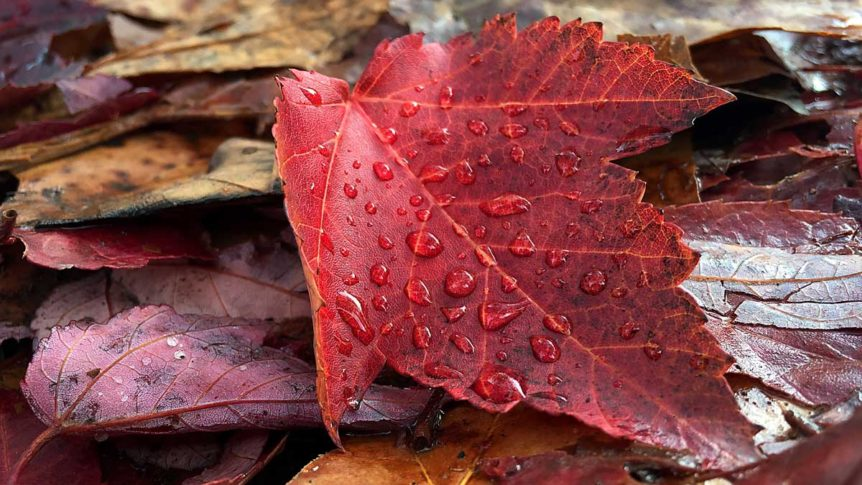 Leaf with raindrops in the fall