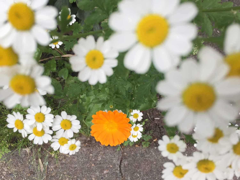 Spin: Spring forward
